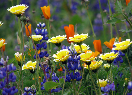 Wildflowers Boost Mood